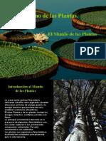 Exposicion de Biologia I Reino de Las Plantas