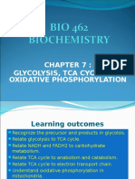 07_glycolysis, Tca Cycle and Oxidative Phosphorylation