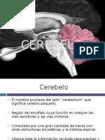 Cerebelo y Tronco Encefalico