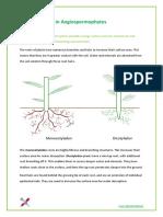 9.2 - Transport in Angiospermophytes.pdf