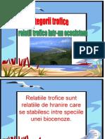 Relatii Trofice in Ecosistem
