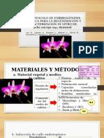 Un Protocolo de Embriogénesis Somática Para La Regeneración