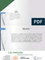 Meiosis Fg