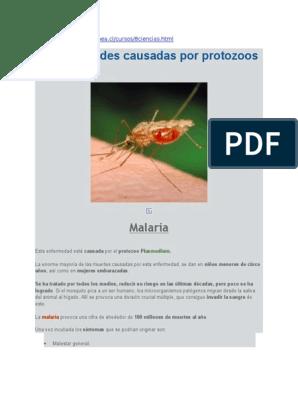 la malaria es causada por protozoos