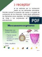 Mecano Receptor