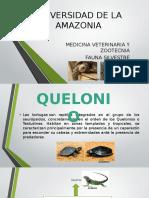 Exposicion de Quelonios en La Amazonia Colombiana