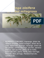 Moringa Oleifera y Kion (Agroexportacion)