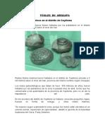 fosiles en Arequipa.docx