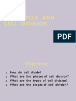 Cell Cycle (Anne)
