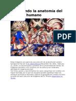 Explorando La Anatomía Del Cerebro Humano