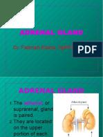 adrenal.ppt