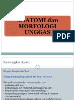 3-anatomi-unggas