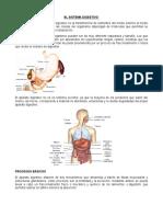 Estructura Del Aparato Digestivo Reproductores Lactancia 2