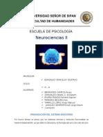 El Sistema Endocrino Neuro III (1)