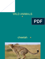 Animals 2º