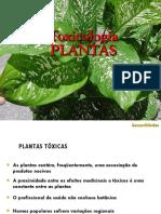 Intoxicacao Por Plantas