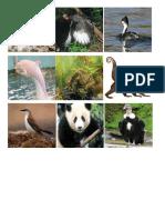 Animales en Peligro de Extincion - Vecina