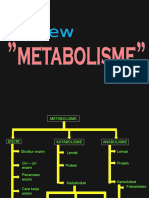 Review-metabolisme-1.ppt