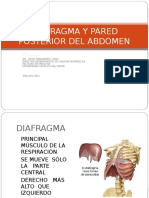 8. Diafragma y Pared Posterior Del Abdomen (2013)