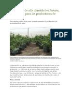 Plantación de Alta Densidad en Bolsas en Arandano