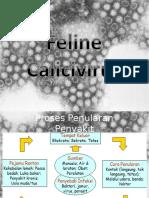 Calici Virus Final