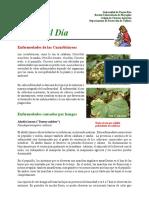 Enfermedades_Cucurbitaceas.pdf