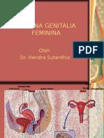 3.FEMININA