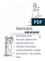 11 Endocrine Glands