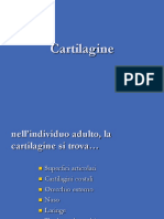 cartilagine.pdf