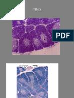 tessuto linfoide.pdf