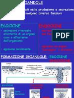 2015 ghiandole Esocrine.pdf