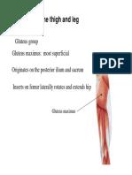 thigh_leg_muscles.pdf