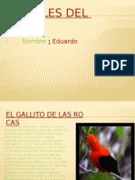 Animales Del Peru EDU