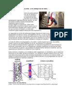29937343-La-quimica-de-las-telas-de-arana.doc