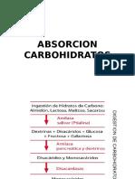 Absorción de Carbohidratos