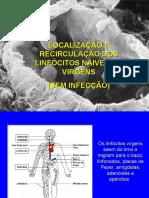 Localização e recirculação de linfócitos virgens