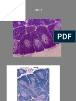 tessuto linfoidetytuy