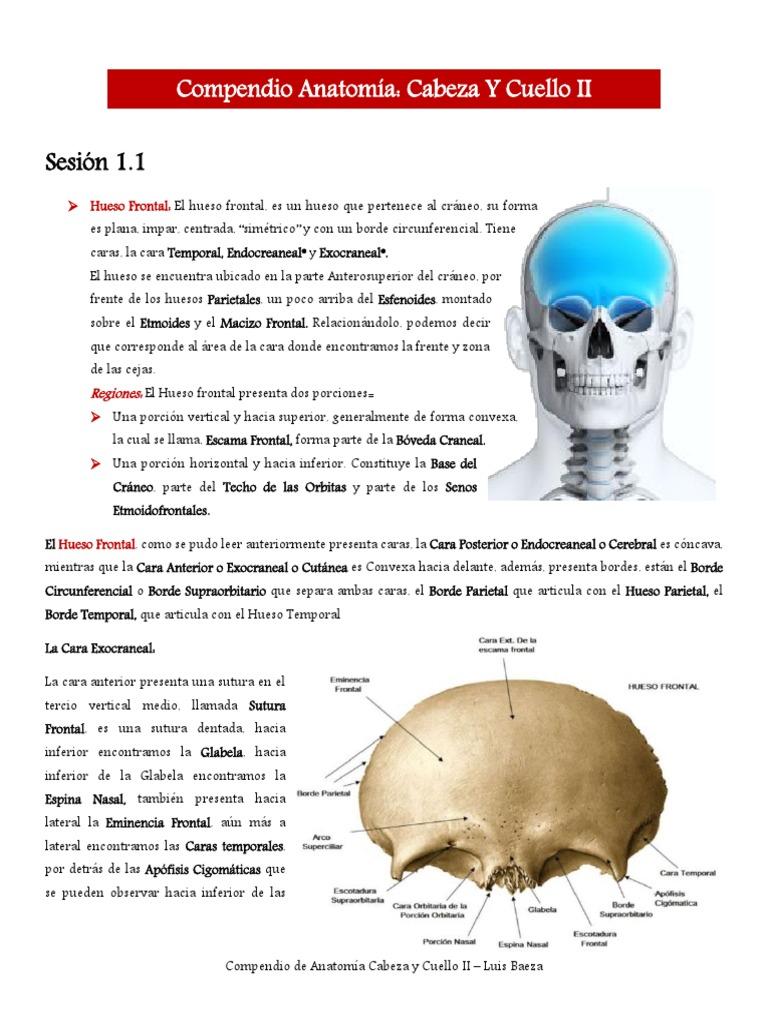 Compendio Anatomía
