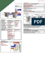 Development of Urinary System