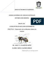 Practica 1 Entomologia