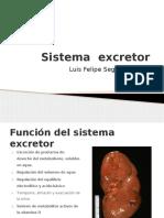 Histologi_a Del Sistema Excretor f