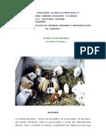 PROYECTO-EMPRENDIMIENTO DE COBAYO.docx