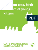 EG18 Pregnant Cats, Birth and Care of Young Kittens