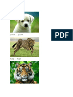 10 Animales en Inlges