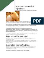 Tipos de Reproducción en Los Animales y Plantas