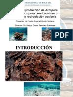 Cultivo y Reproducción de Acropora Palmata y Acropora