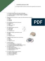 Test Anatomía