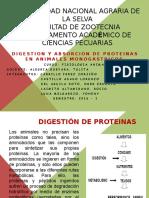 DIgestion Y Absorcion de Proteinas en Monogastricos