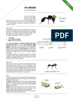 Queen Ant Care Sheet