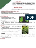 Las Plantas Micronutriente
